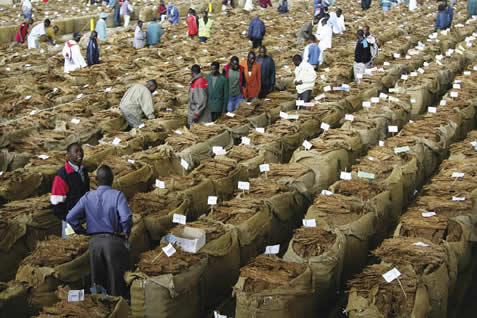 Tobacco Sales earn K159 Billio...