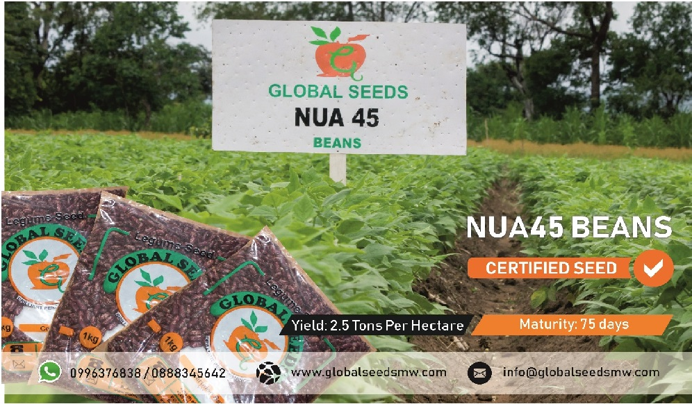 Rich in Iron and Zinc . Nua 45 bean is a...