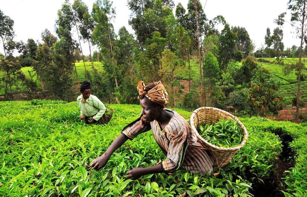 GOVT PLEDGES AGRICULTURAL ADVA...