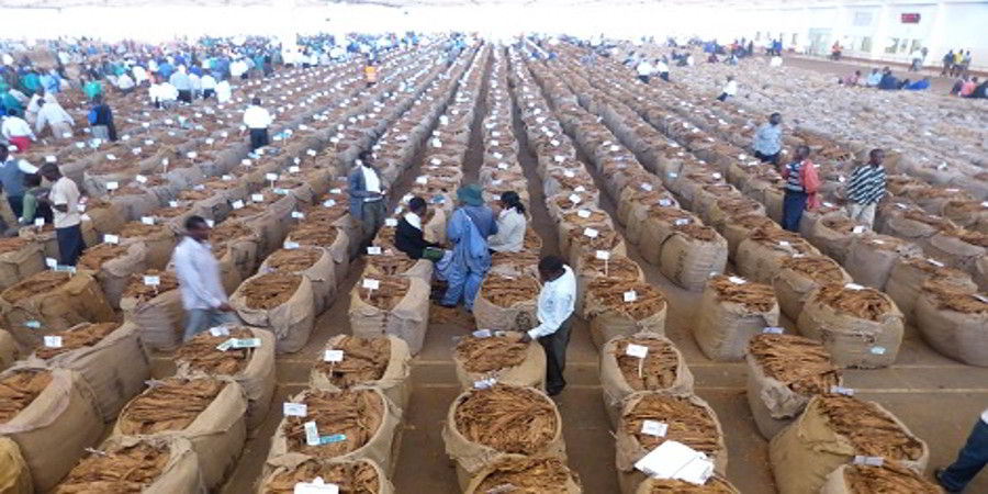 AHL SETS UP TOBACCO COLLECTION...