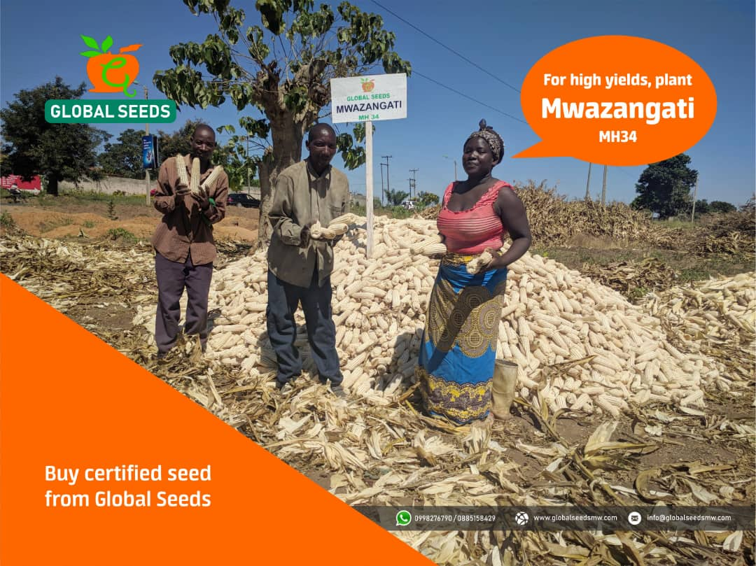 Havest up to 10 Tons per hectare wi...