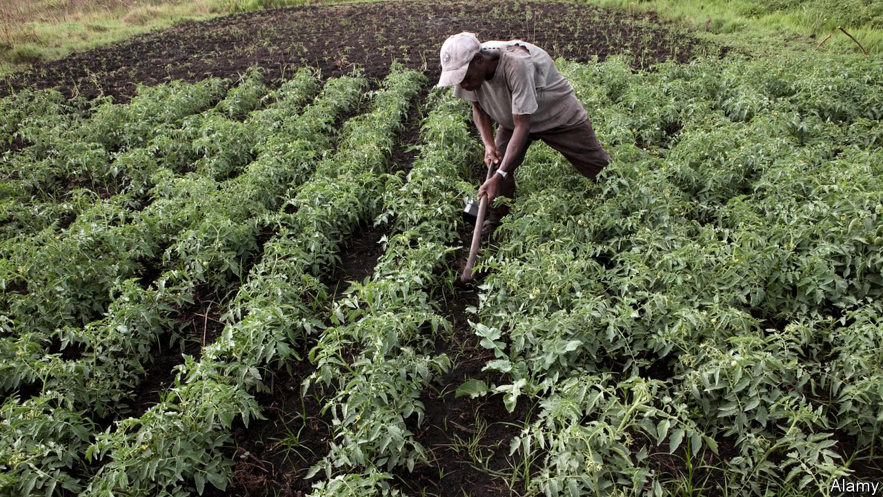 AGRO FIRM TIPS BUSINESSES ON P...