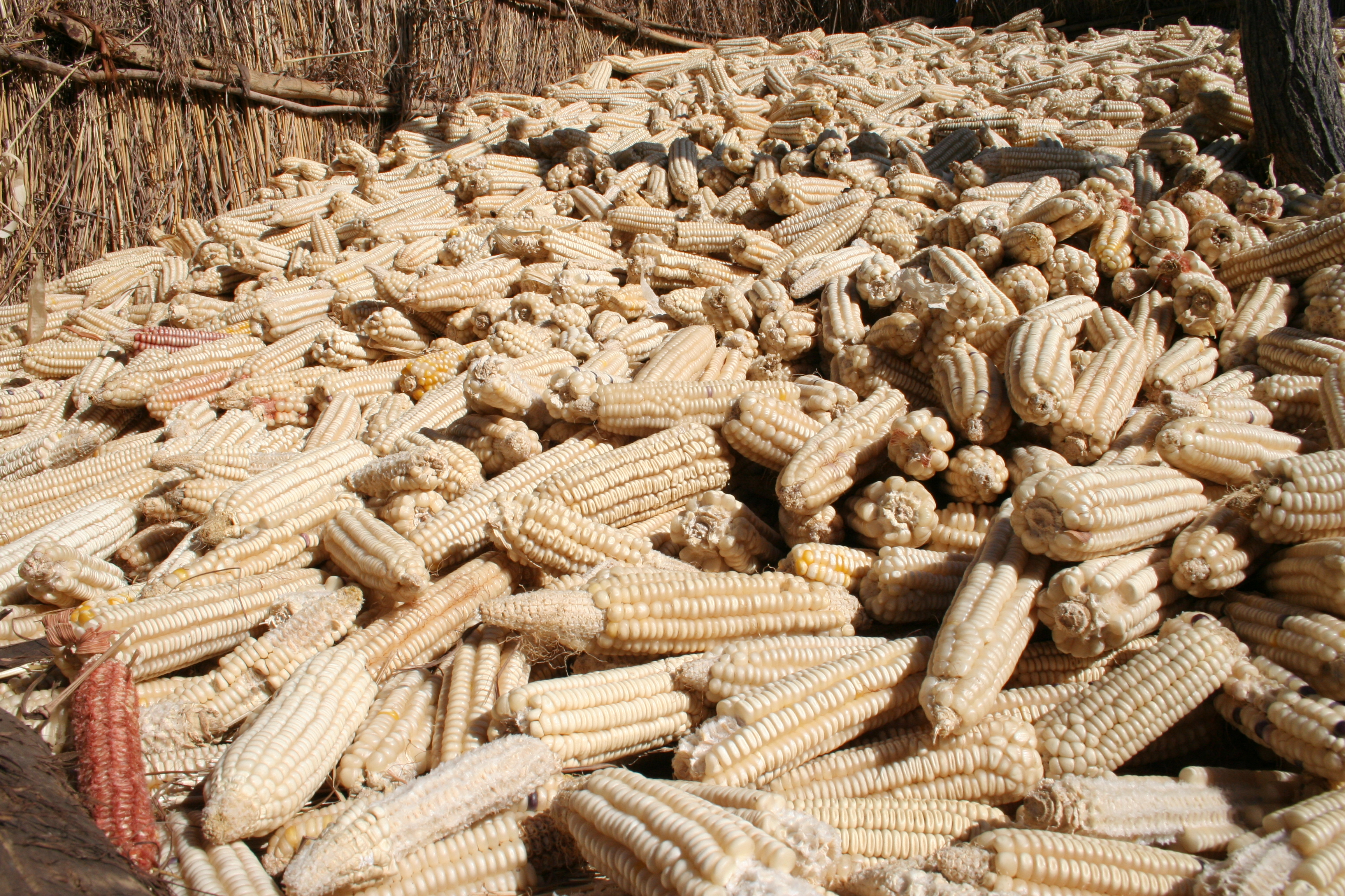 MAIZE PRICES DOWN TO K111/Kg...
