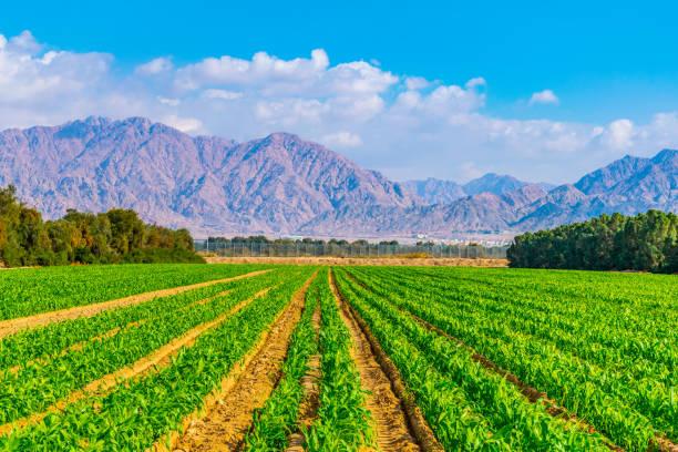200 MALAWIANS GET AGRI TRAININ...